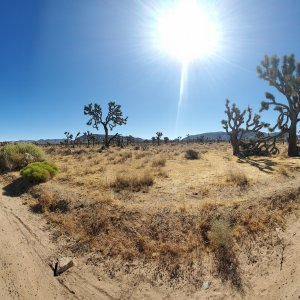 jeep wide angle joshua tree.jpg